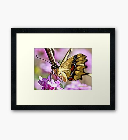 WOW me Beautiful Framed Print