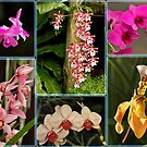 Orchid Display by Robert Abraham