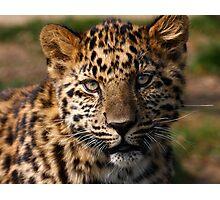 Amur Leopard cub Photographic Print