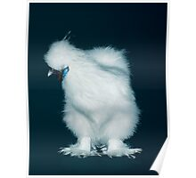 Feather Leg Silkie White Pullet Poster