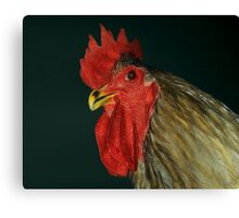 Blue Jersey Giant Cock Canvas Print