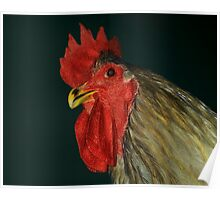 Blue Jersey Giant Cock Poster