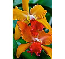 Colorful Orchids Photographic Print