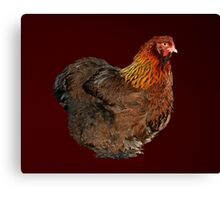 Partridge Cochin Pullet Canvas Print