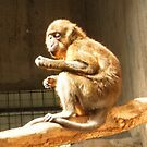 Metroparks Zoo 11 by BarbBarcikKeith