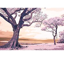 Pink Landscape II Photographic Print