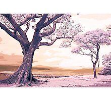 Pink Landscape II Photographic Print