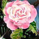 Pink Rose by arline wagner