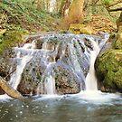 woodland flow by Finbarr Reilly