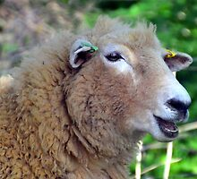 Ewe have a great smile......... by lynn carter