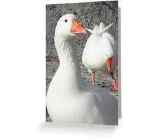 Wild White Duck Greeting Card
