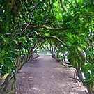 Pretty Green Walkway at Abbotsbury Dorset UK by lynn carter