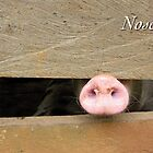 Nosey Neighbor by JpPhotos