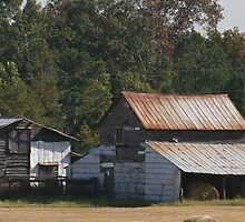 Old Farmstead on Hwy 6 near St. Matthews, SC by Pamela Kadlec