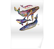 Four Whales Pyramid Poster