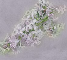 Lilac Song by MotherNature2