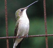 Bird On A Wire by Ginny York