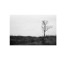 lonely tree by MsDunwich