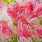 Inside the pom Pom flower by Dave Storey