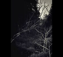 Black Forest by MsDunwich