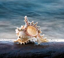 Shell 2 by Eduard Gorobets
