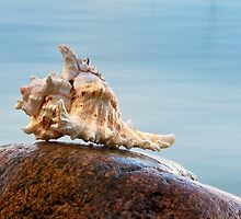 Shell 4 by Eduard Gorobets