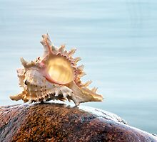Shell 6 by Eduard Gorobets