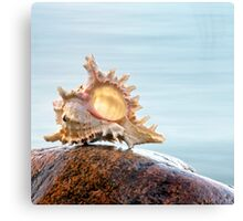 Shell 6 Canvas Print