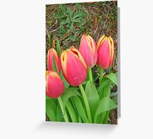"""Tulips - """"A Touch of Spring"""" (1) Greeting Card"""