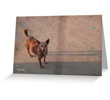 slum dog Greeting Card