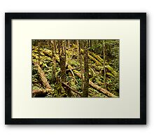 Tree Recycling Framed Print