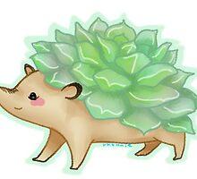 echeveria hedgehog by rhonnnnie