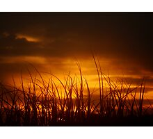 Grass of the Sand Dunes, North Coast, NSW, Australia Photographic Print