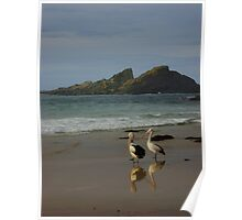 Pelicans at Seal Rocks, NSW, Australia  Poster