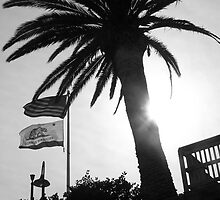 Palm Tree in b and w by coffeenoir