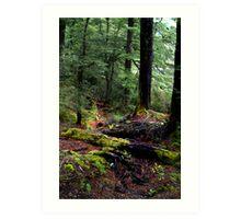 Autumn Paths Art Print