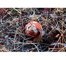 Red Egg Photographic Print