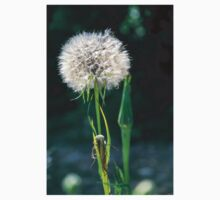 Dandelion blowball. Photographed in Armenia  One Piece - Short Sleeve