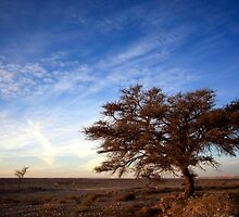 Dry parched tree in a desert landscape  by PhotoStock-Isra