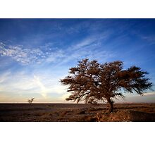 Dry parched tree in a desert landscape  Photographic Print