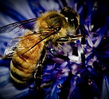 Buzzted! by Johnny P