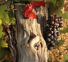 WINE ON THE VINE by Paul Cavanagh