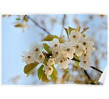 Sunrise Blossom Poster