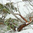 Snow Queen by Donovan wilson
