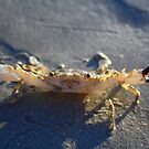 Cranky Crab by Sheldon Pettit
