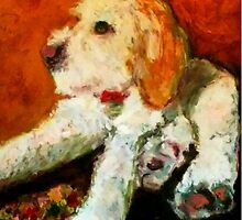 Spinone Pup by tomrhody