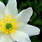 Alphabet Blooms Beginning With - A