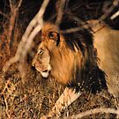 """ADRENALINE PUMPING """"NIGHT DRIVE AND CAPTURE"""" by Magaret Meintjes"""
