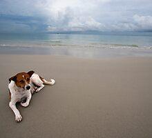 Dog On The Beach by Bobby McLeod