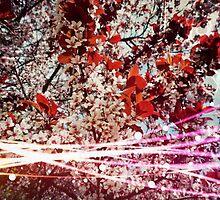 Blossoming Spring  by illuminavel